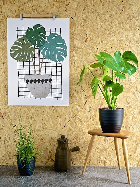 Monstera juliste